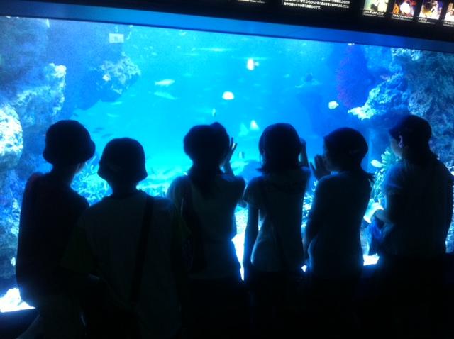 8月2日  水族館オープンに先にがけ、